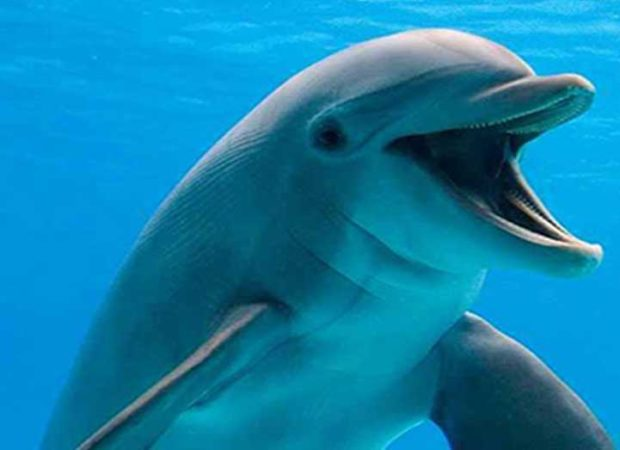 Dolphin Village In Mkadi Bay